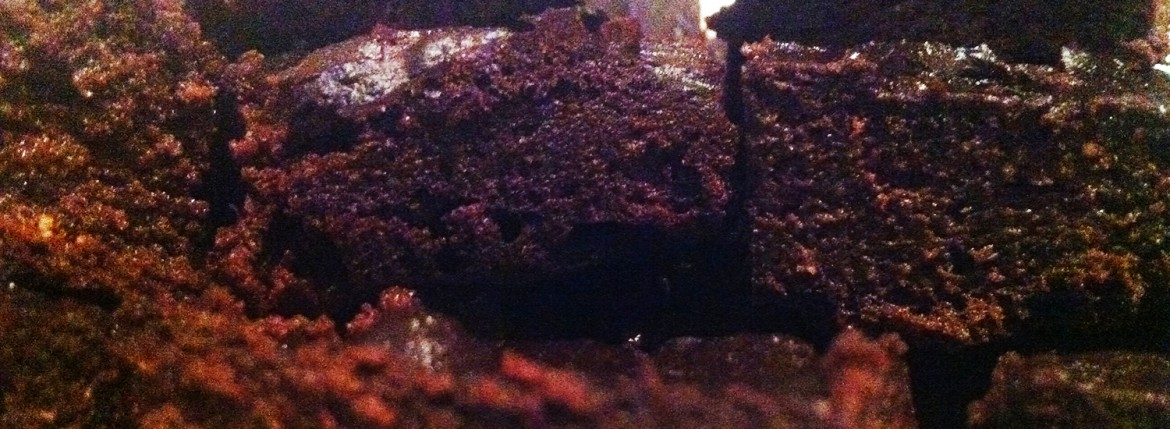 avocado-brownies-07